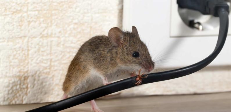 Indoor Pest Repeller by Crioxen